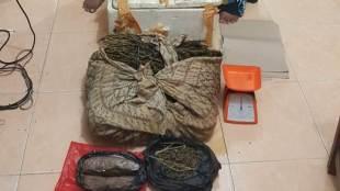 Ibu dan anak yang ditangkap oleh Sat Res Narkoba Langsa bersama dengan barang bukti berupa ganja 4kg (dok. KM)