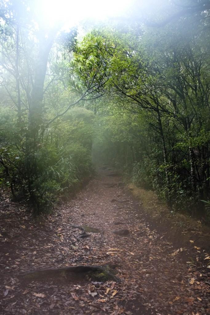Path To Rangitoto Summit