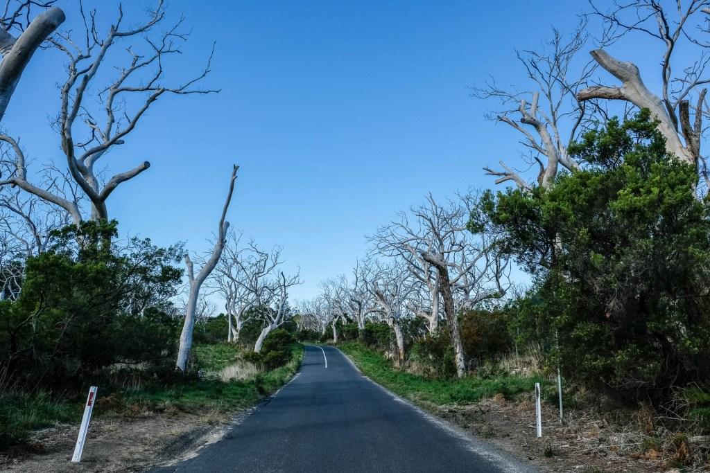 Nackte Weisse Bäume & Grüne Büsche