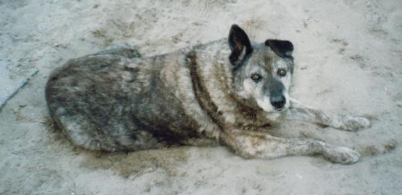 """Poszukujemy miejsca na pomnik dla legendarnego wołomińskiego psa """"Miśka – Szeryfa"""""""