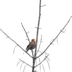III Zimowe Ptakoliczenie w Ostrowi Mazowieckiej
