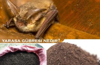 Yarasa Gübresi