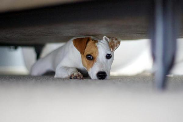 Sok kutya fél a vihartól (Fotó: dogs.about.com)