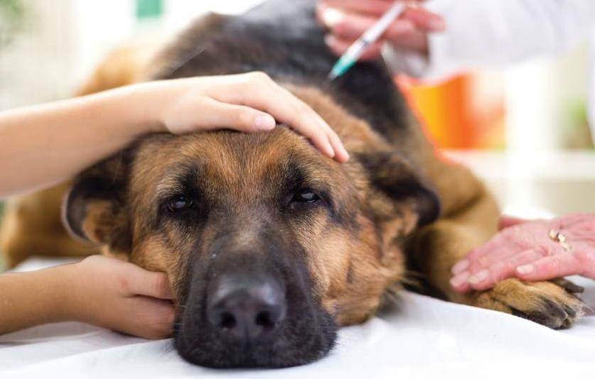Kutyamérgezés: tünetek és teendők
