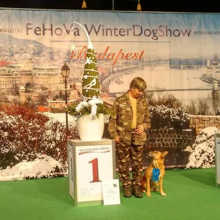 Erika és Rocky a Dog Dancing Téli Kupán első helyezést ért el (2017.02.18.)