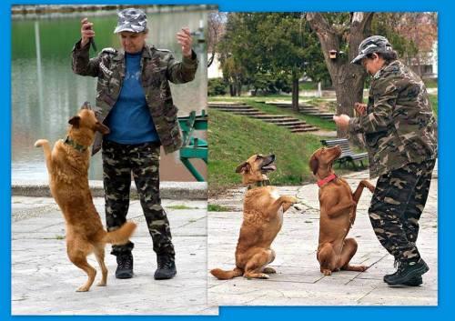 Gyurasics Erika, Rocky és Csitri dog dancing bemutatója (Fotó: Kutyavilág Alapítvány)