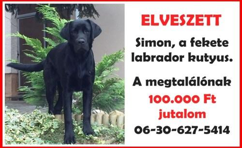 Simon, a fekete labrador kutyus plakátja