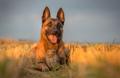 Barátok - a kutya és a bagoly.jpg (Fotó: Tanja Brandt)