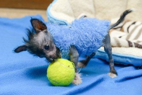 A kiskutya és a teniszlabda