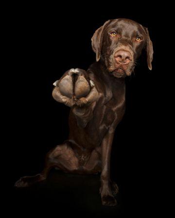 Fel a mancsokkal - fotóprojekt kutyákkal 10