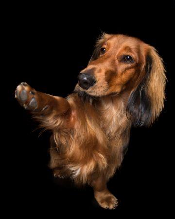 Fel a mancsokkal - fotóprojekt kutyákkal 11
