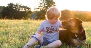 gyerekbarát kutyák