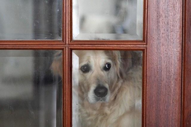 kutya szeparációs szorongás kezelése
