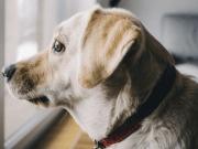 kutya zajtól való szorongás