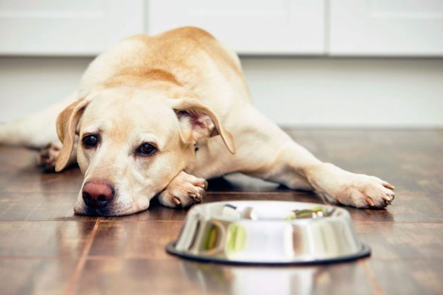 nem eszik a kutya_
