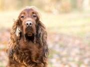 kutya nyáladzás okai