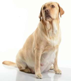 kutya vemhesség hétről hétre