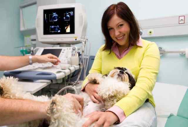 kutya vemhesség jelei és az állatorvos