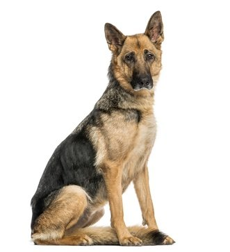 alultáplált kutya