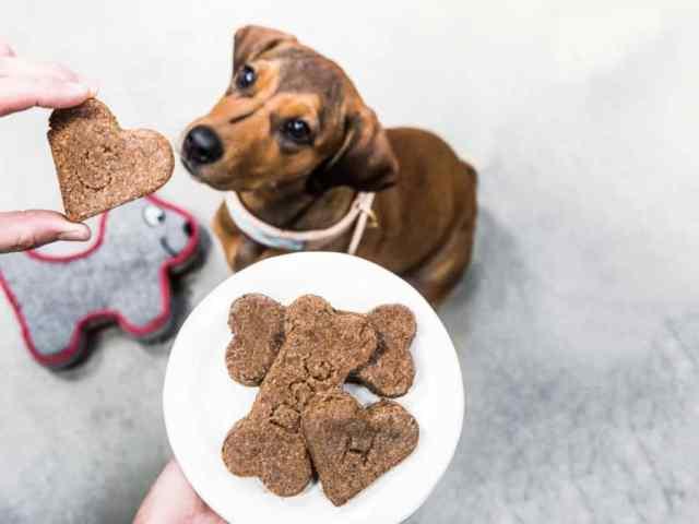kutya snack