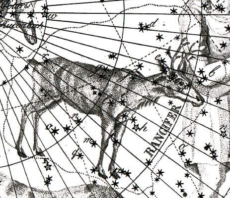 Het sterrenbeeld Rangifer - Rendier