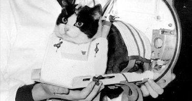felicette, de eerste kat in de ruimte