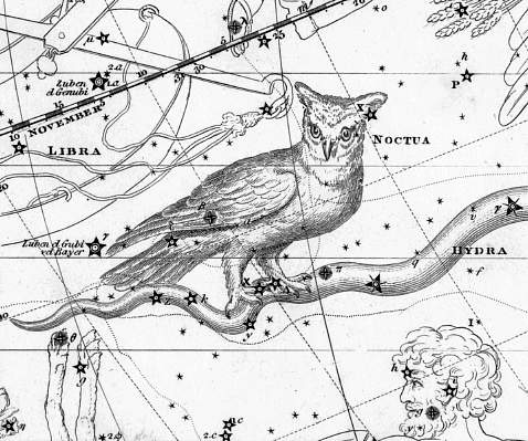 Het sterrenbeeld Noctua volgens Jamieson