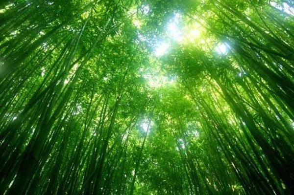 Bamboo Farming In Kenya 7 Things You Need To KnowKuza Blog Kuza Blog