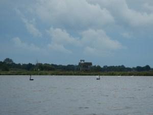 Zwarte zwanen op het Zuidlaardermeer
