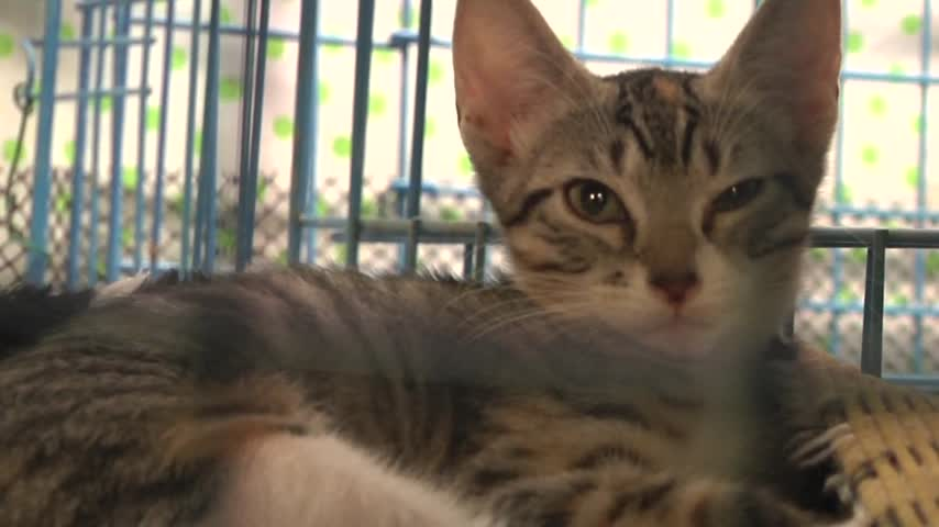 Feral Cat population control_45471074-159532