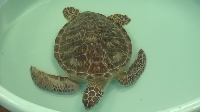 Ridley Sea Turtle hatching season_44370050-159532