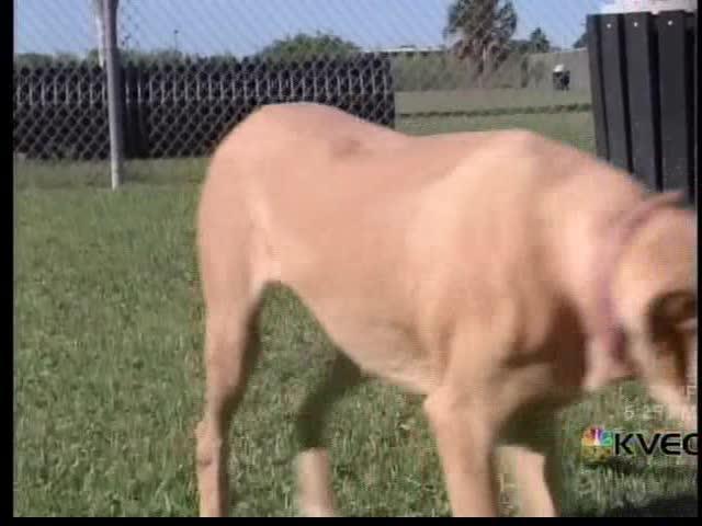 Pet of the Week- Jasmine_67065180