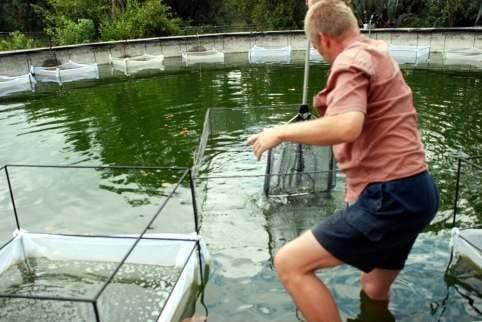 vissery