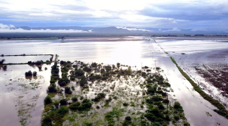 Koedoe Vloed 1