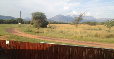 """A chance to spot the """"Big 5"""" this festive season in the Northern Region Parks"""