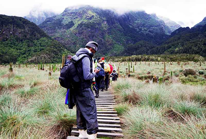 Hikers in a giant lobelia garden in the Rwenzori Mountains+Uganda+travel_with+Kwez+Outdoors