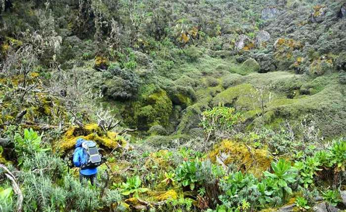 Diverse plant-life in the Rwenzori Mountains+Uganda+travel_with+Kwez+Outdoors