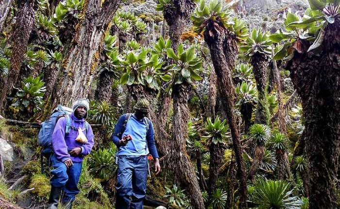 Hiking through fairytale like gardens in Rwenzori Mountains+Uganda+travel_with+Kwez+Outdoors