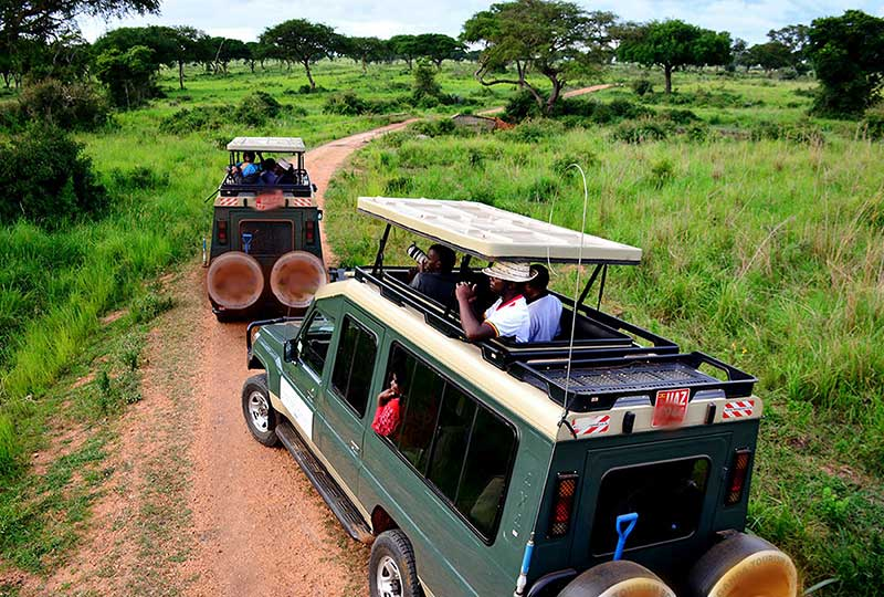 Out for a morning game drive in a national park+Uganda+travel_with+Kwez+Outdoors