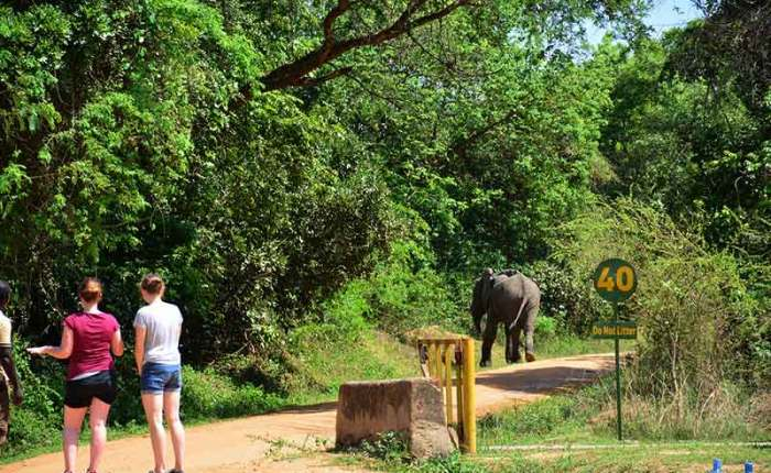 Tourists encouter a wild elephant in Murchison Falls National Park-travel with Kwezi Outdoors