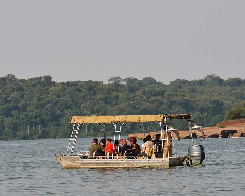 Safari cruise brings you up close with wildlife