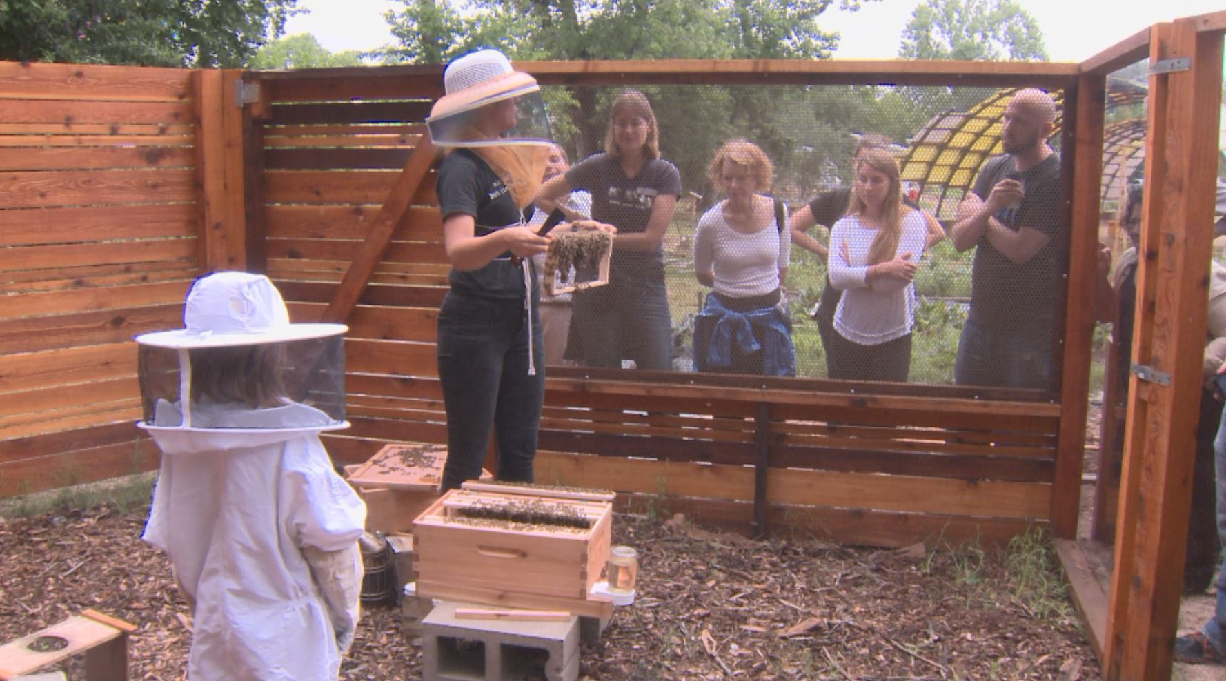 Sustainable Food Center bee apiary_273804