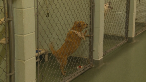 San Marcos Regional Animal Shelter hits capacity_288298