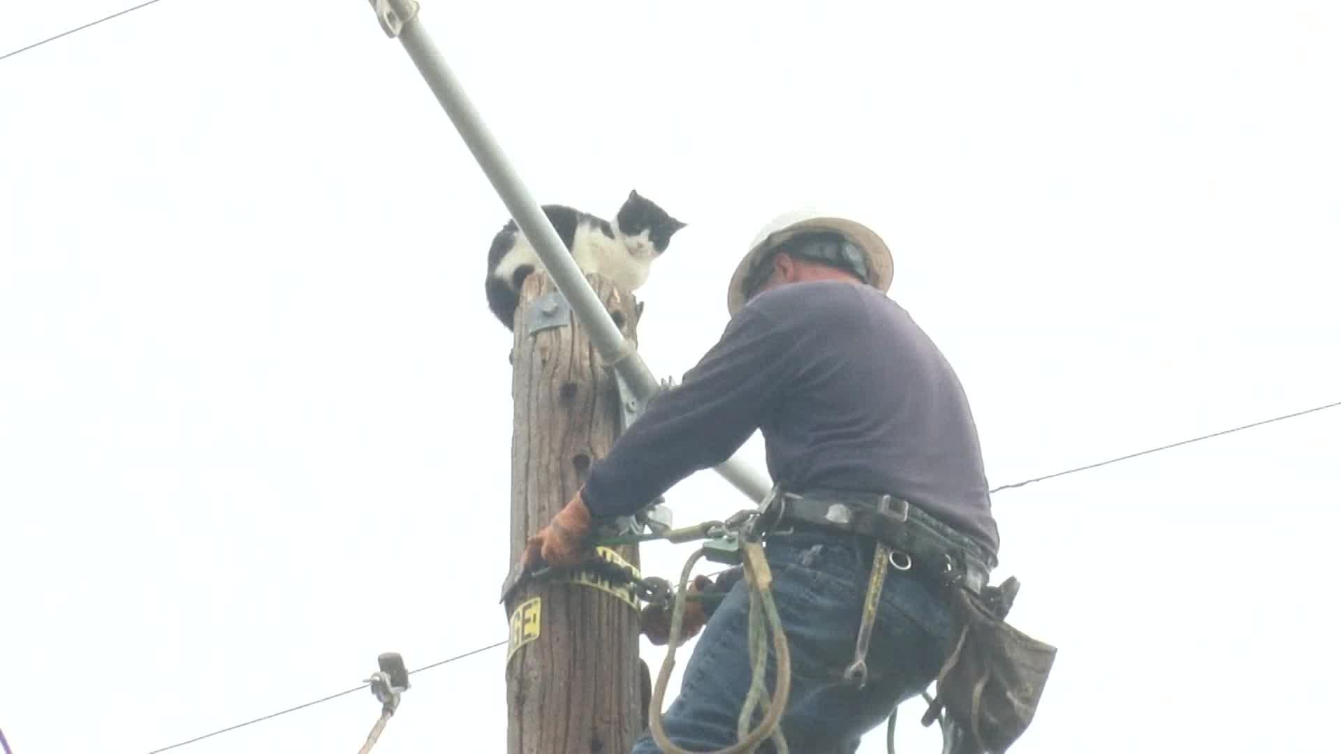 Fresno cat rescue (NBC News)_378542