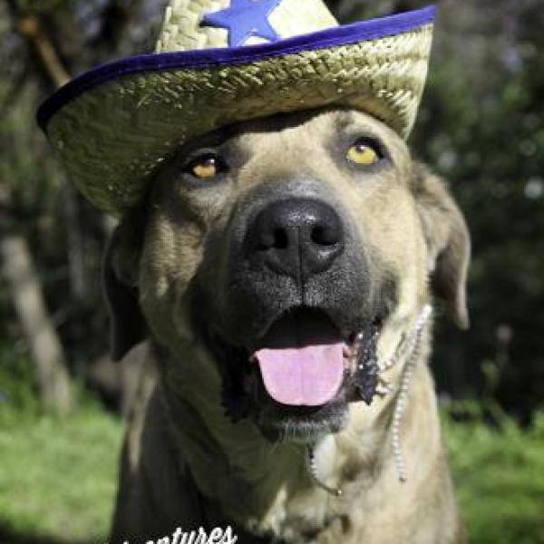 laken cowboy_434168