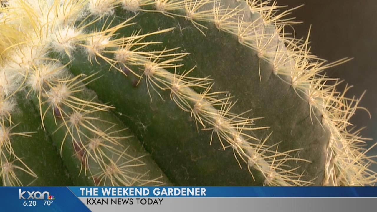 Weekend Gardener: Succulent and cactus gardens