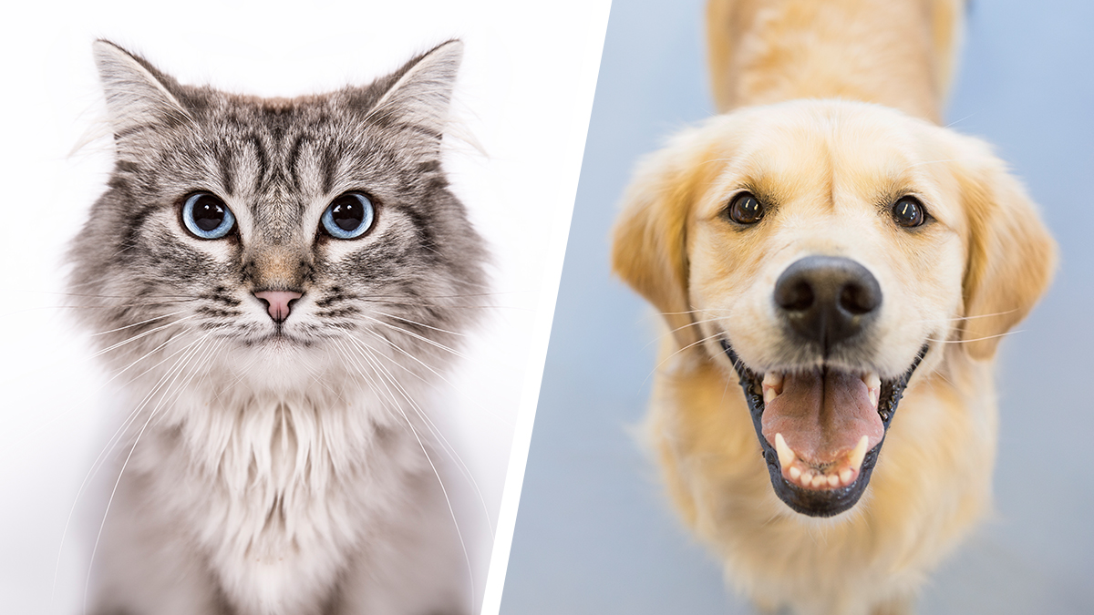 dog-cat-diptych_497498