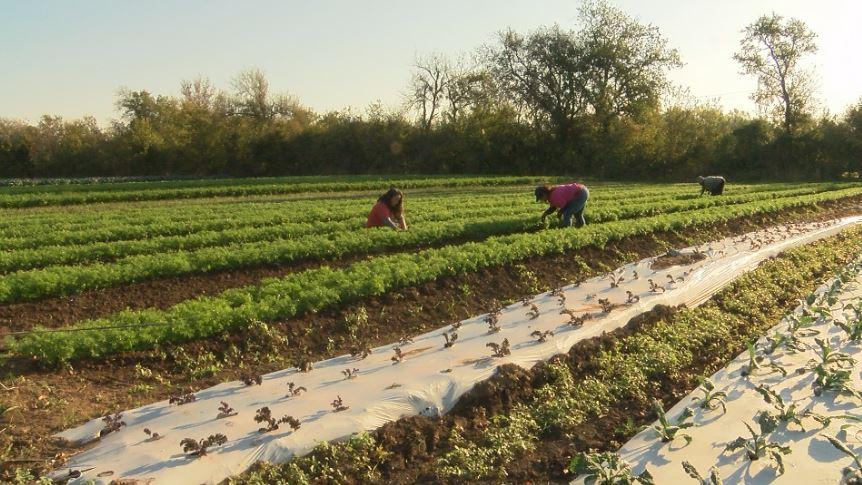 farming_589261