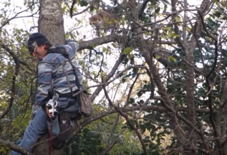 cat rescued from tree_597847