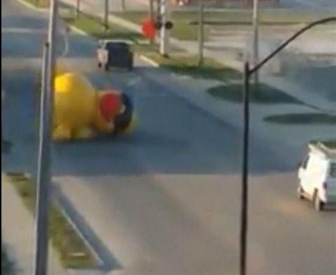 loose duck_1525111024487.JPG.jpg